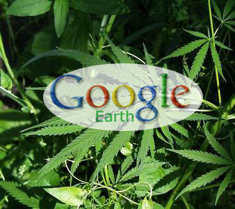 marijuana-e-google