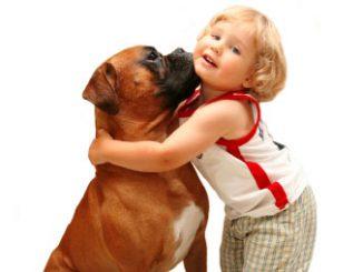 Cuidados com cão