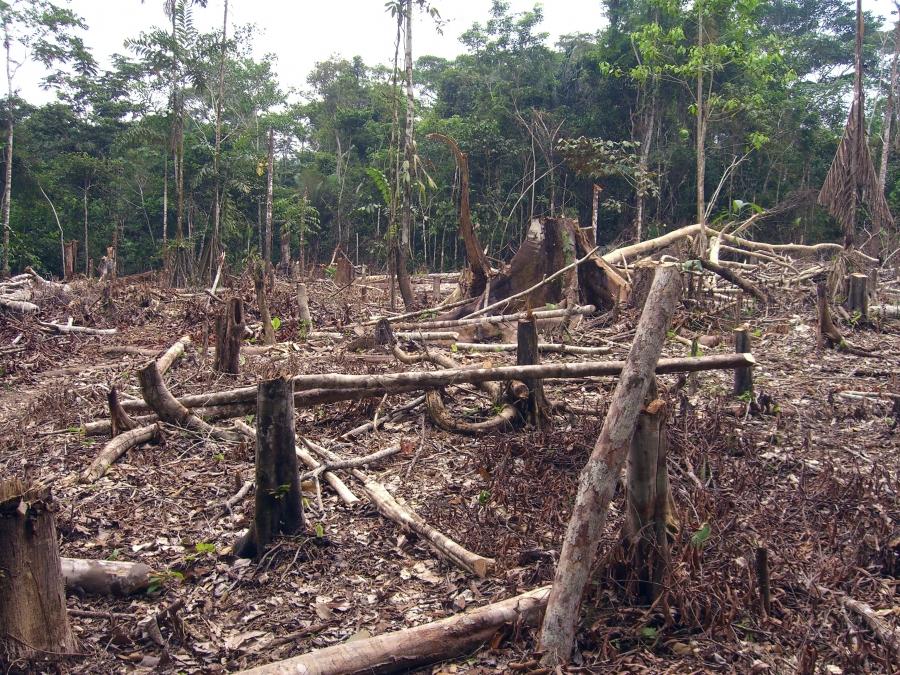 Exploração de recursos naturais como a madeira por exemplo.